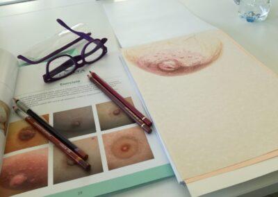 disegni areola mammaria